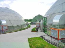 蔬菜种植场